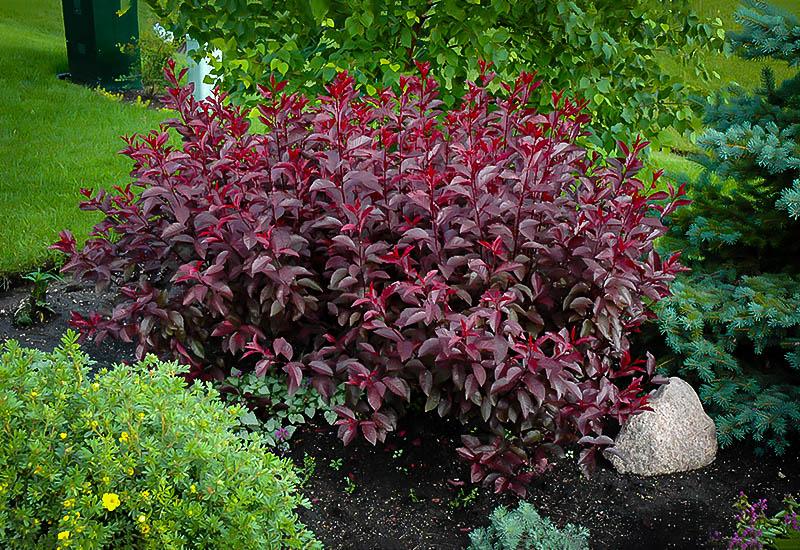 Plant Hardiness Zones 2 8
