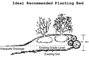 Ebb Tide Tree Rose also 50534 additionally Faqs besides Faqs also Garden Trees. on shrubs that grow in shade