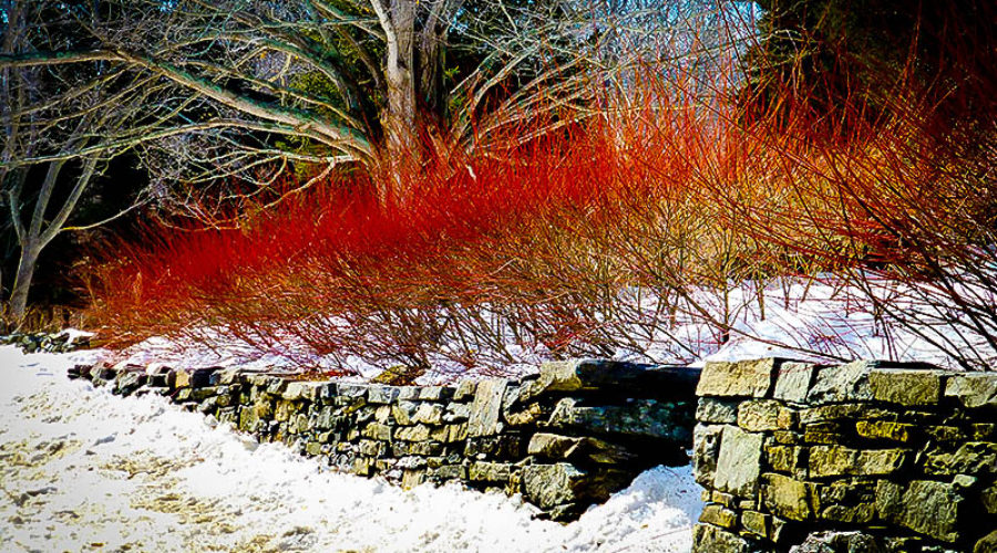 Planting for Winter Interest and Color