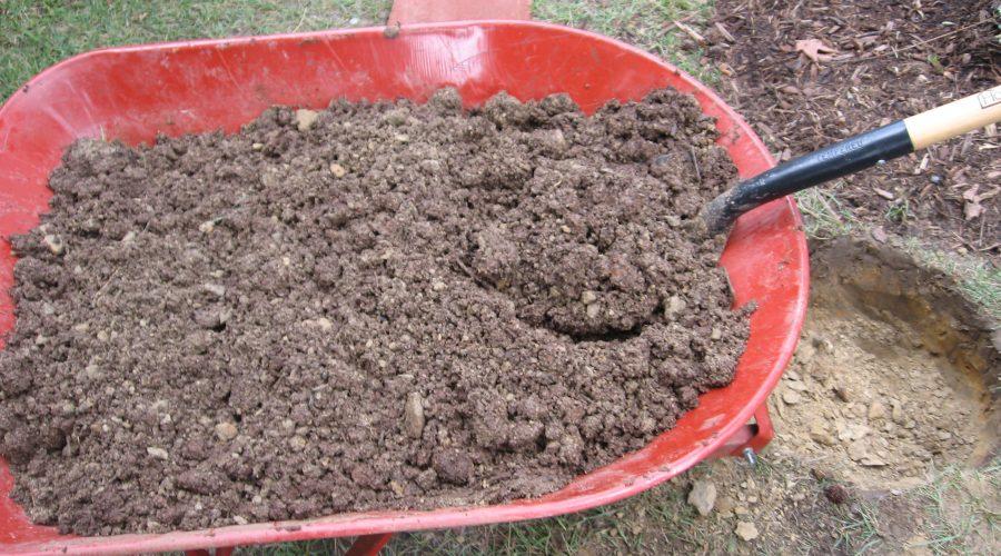 5 Steps to Better Soil for Fall Planting
