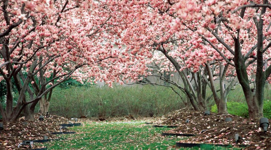 Spring is Coming – 5 Steps to Get Your Garden Ready