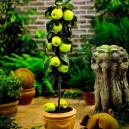 tangy-green-urban-apple-2
