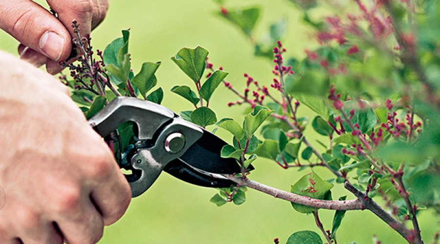 How To Trim A Tree