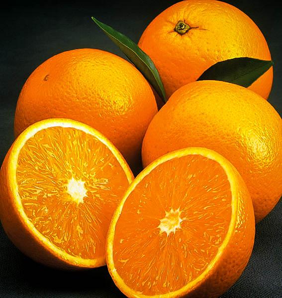 Olinda Valencia Orange Trees For Sale The Tree Center