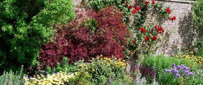 Save Space and Add Beauty – Grow Shrubs Against a Wall