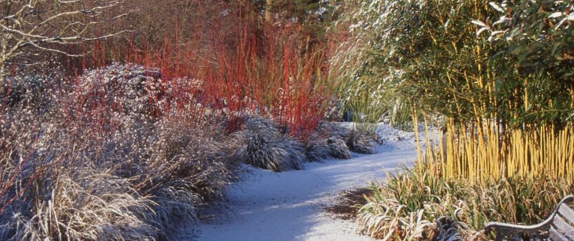 Winter Landscaping Tips