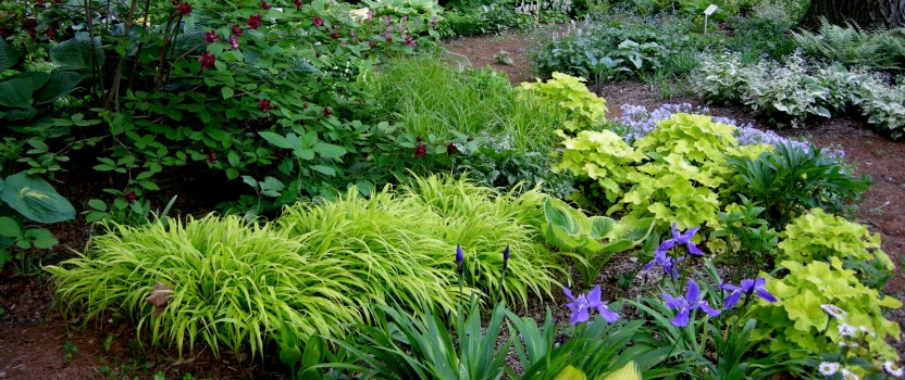 A Woodland Garden of Flowering Shrubs The Tree Center