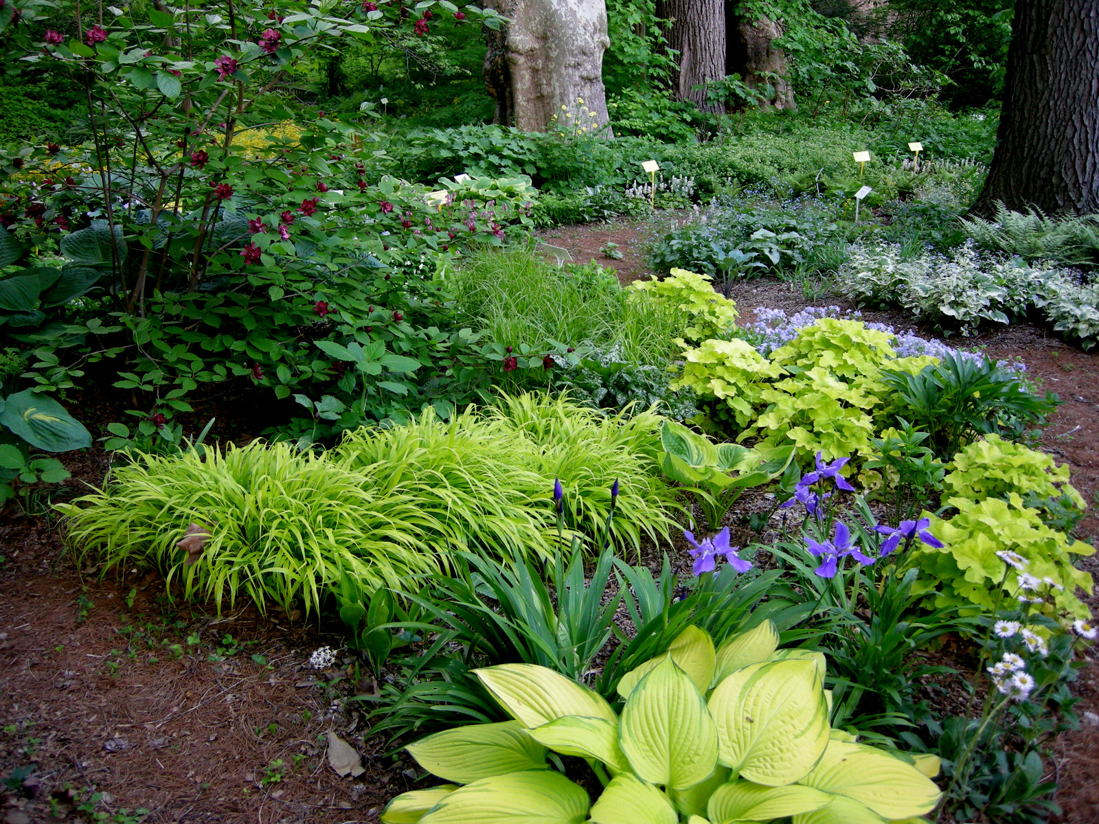 A Woodland Garden Of Flowering Shrubs