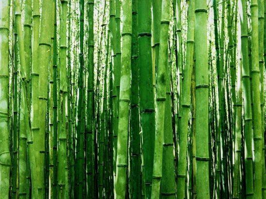 Fastest Growing Green Multiplex Bamboo