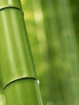 Multiplex Bamboo