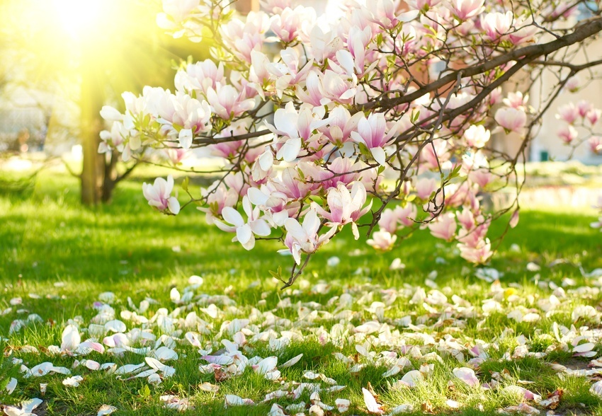 Flowering Trees And Shrubs For Early Spring The Tree Center