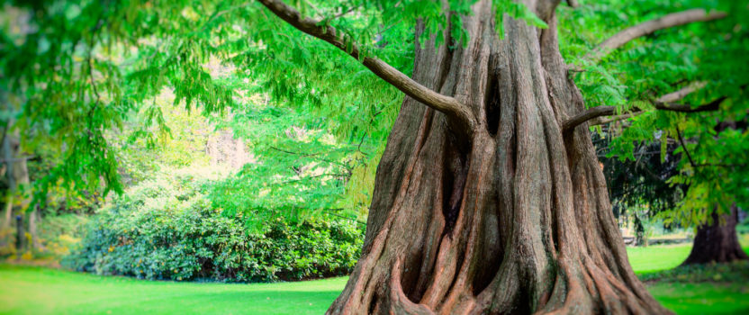 Some Interesting Evergreens for Gardens