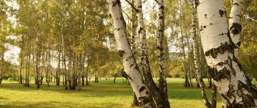 A Garden of Native Trees and Shrubs
