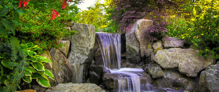 7 Top Plants for Japanese Gardens