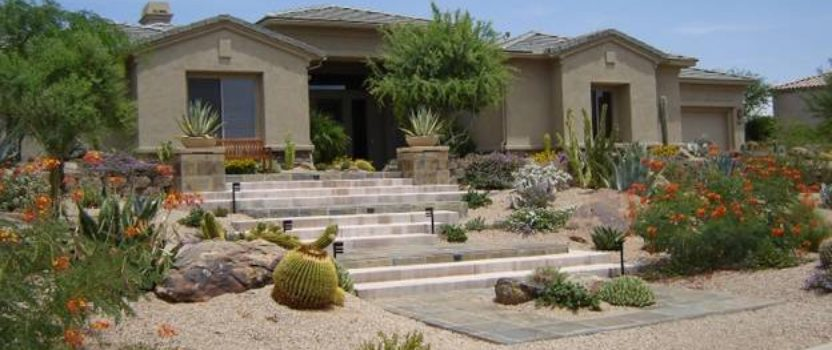 Top Drought Resistant Trees and Shrubs