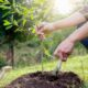 Plant a Tree – Your Gift to the Future