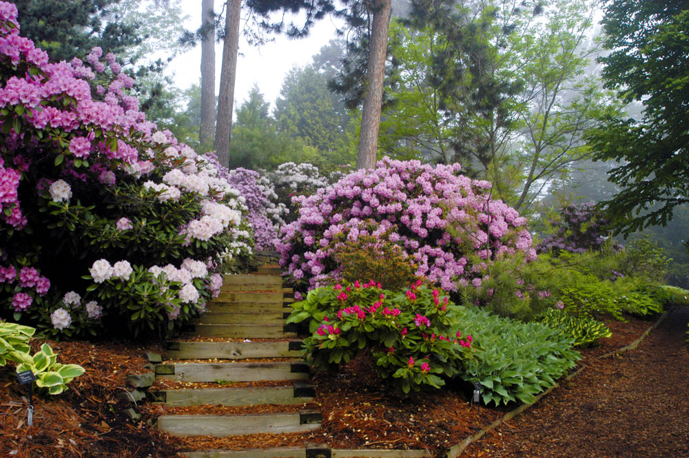 Growing Rhododendrons On Alkaline Soil The Tree Center