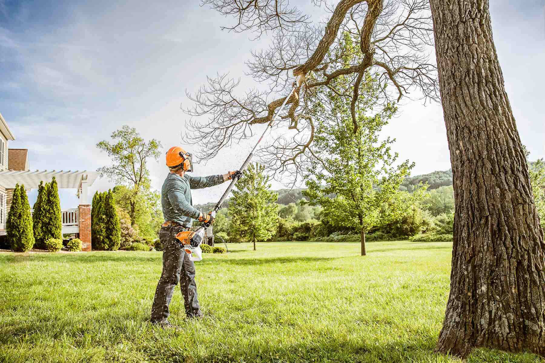 The Basics Of Tree Trimming The Tree Center