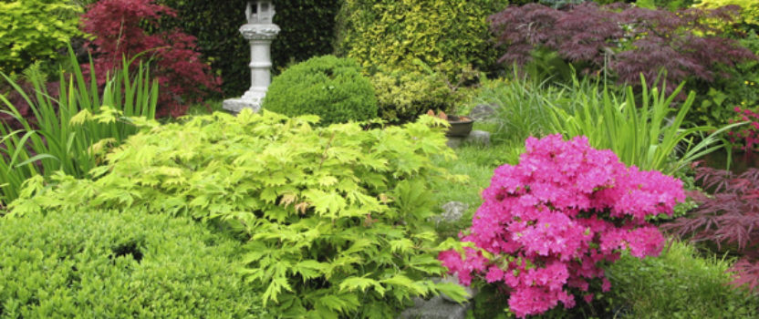Tips on Placing Shrubs in Your Garden