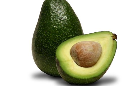 Cold Hardy Avocado