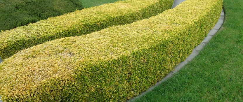 Creative Hedges