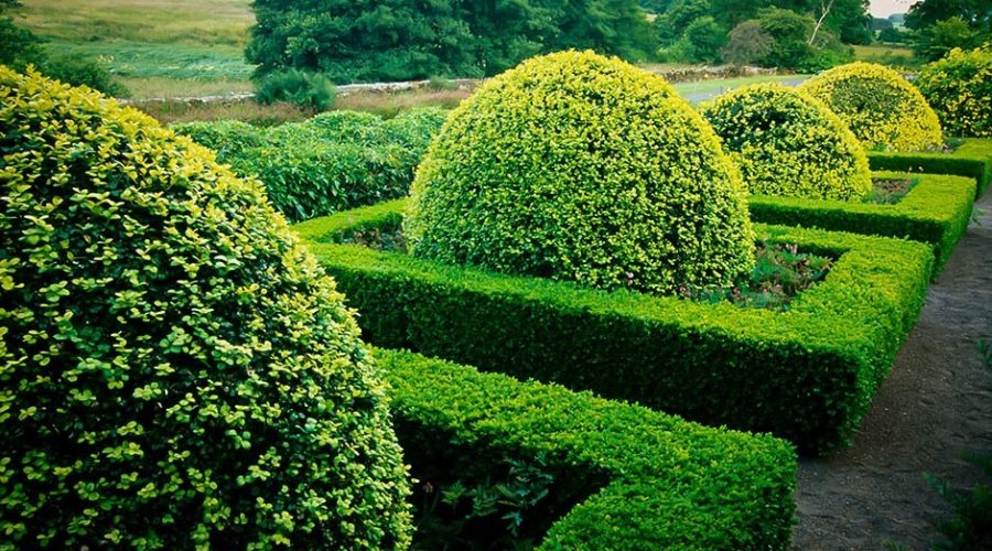 How to Choose the Right Boxwood for Your Garden