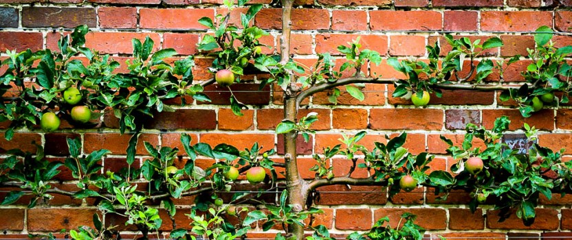 Growing Trees and Shrubs on Walls