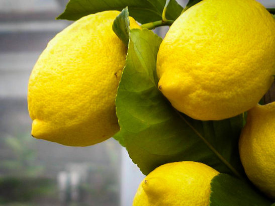Eureka Lemon Tree