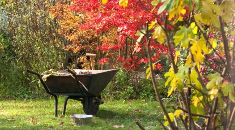 8 Fall Cleanup Tips for a Better Spring Garden