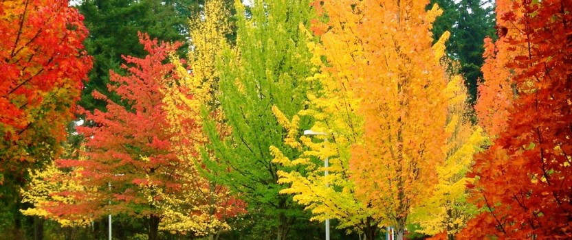 Spectacular Trees for Fall