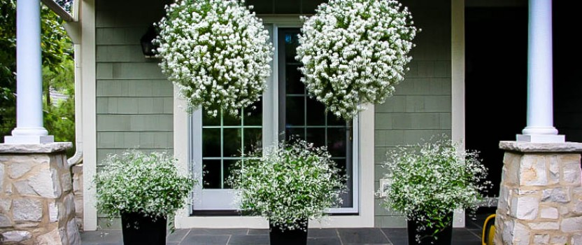 Flowering Bushes for Planter Boxes
