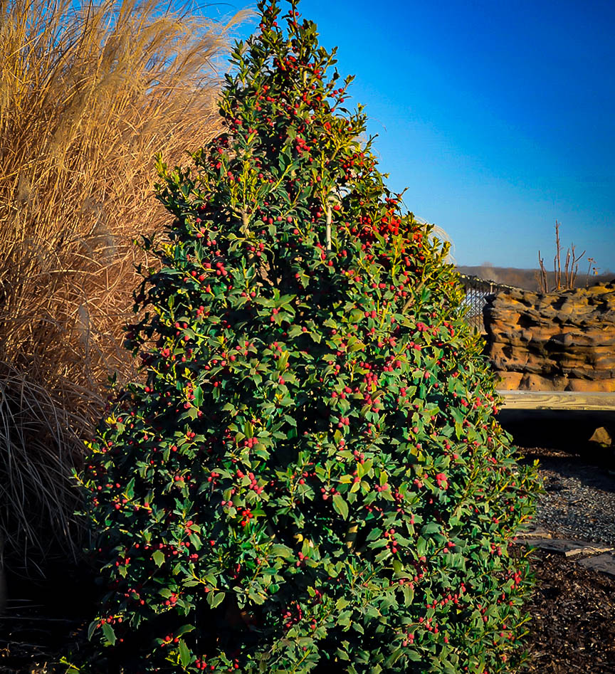 Christmas Holly Tree.Christmas Jewel Holly
