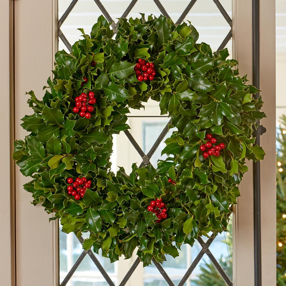 Holly – the Perfect Tree for Christmas | The Tree Center™ on christmas lily plant, christmas pepper plant, snowman plant, christmas box plant, mistletoe plant, christmas pine plant, christmas rose plant, christmas chinese lantern plant, christmas candle plant, cinderella rose plant, christmas kalanchoe plant, name of christmas plant, christmas bulb plant, goldfish plant, polar arctic tundra plant, christmas hope plant, christmas berry plant, christmas tree, christmas heliconia plant, christmas hydrangea plant,