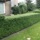 Some Great Alternatives to Boxwood