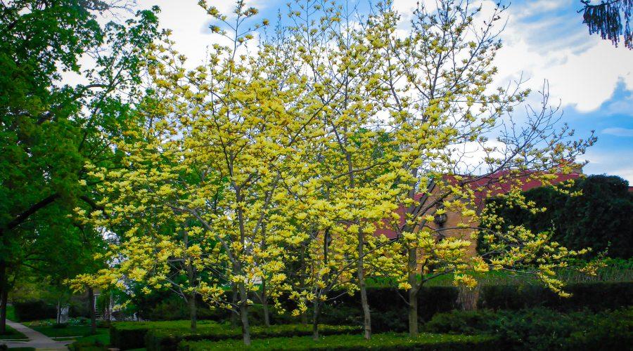 Meet the Magnolias
