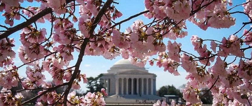 Flowering Trees For Spring