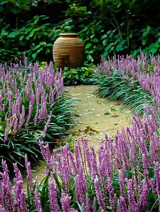 Royal Purple Liriope