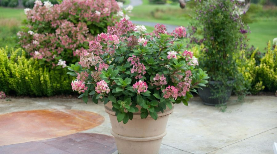 Will My Potted Shrubs Survive Winter?