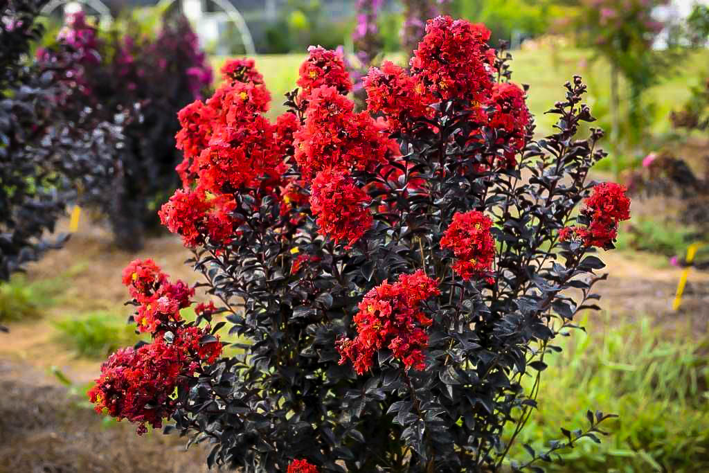 3 Fall Blooming Plants Everyone Should Be Growing The Tree Center