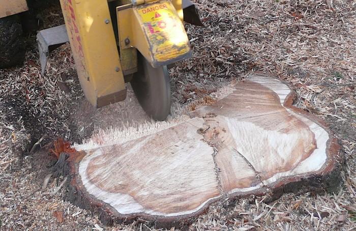 Tree Stump Removal The Tree Center