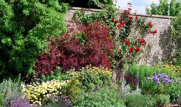 Save Space And Add Beauty Grow Shrubs Against A Wall The Tree