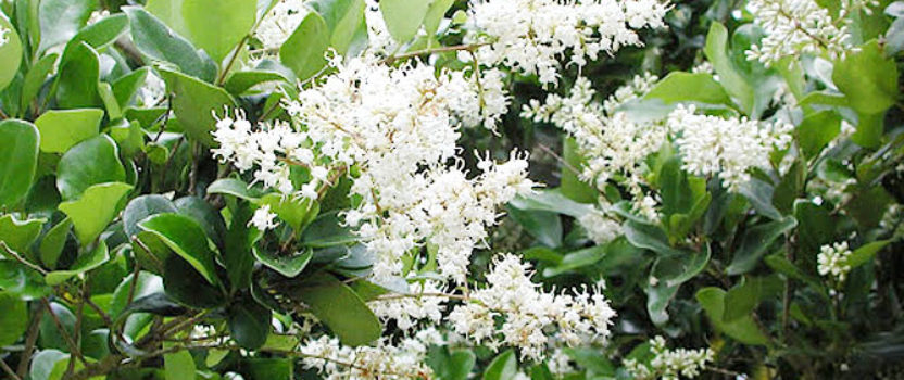 Privet – the Good, the Bad and the Beautiful