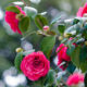 January in Your Garden