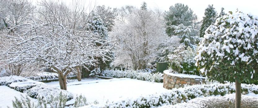 Will My Plants Die Over the Winter?