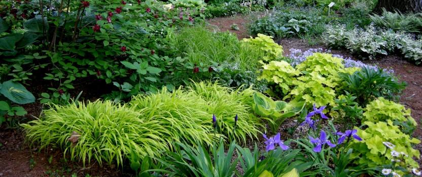 A Woodland Garden of Flowering Shrubs