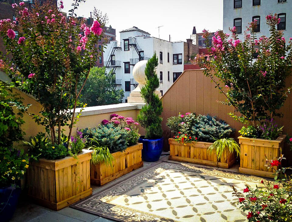 Flowering Bushes For Planter Boxes The Tree Center