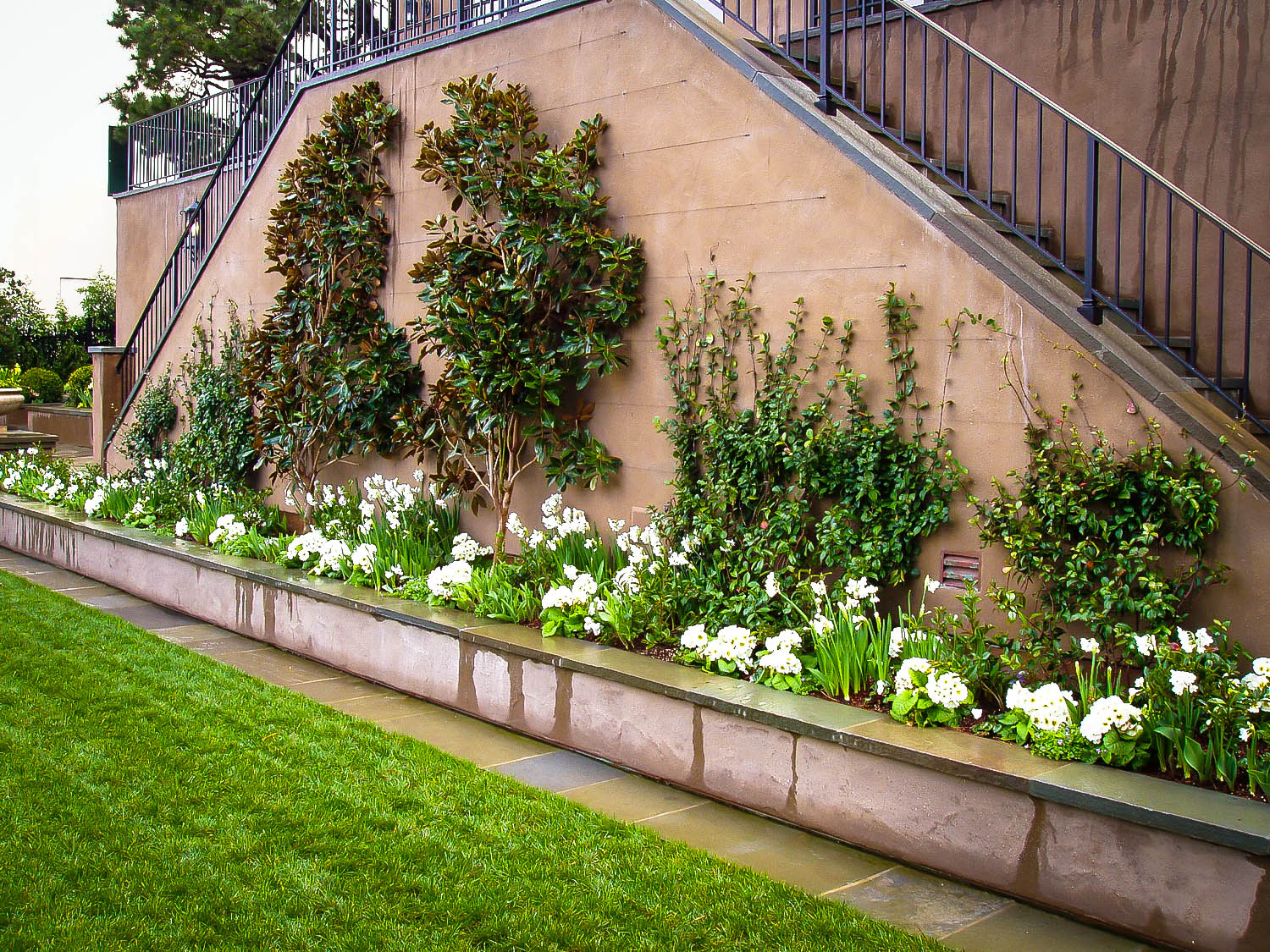 Growing Trees And Shrubs On Walls The Tree Center