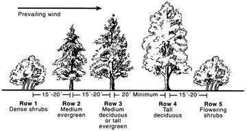 How to create a windbreak the tree center for Garden windbreak designs