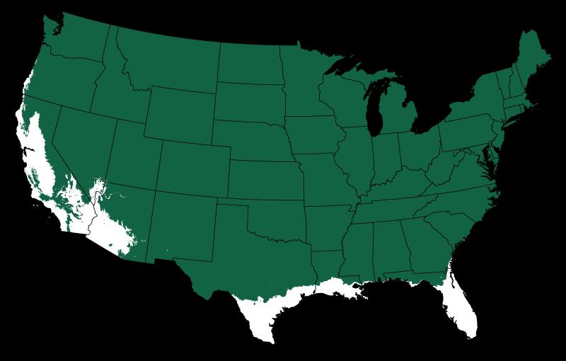 13 Especies más comunes de pino norteamericano