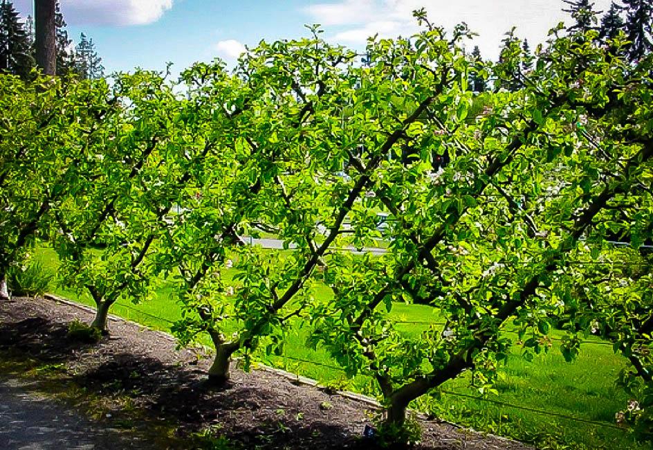 Wall Tree 45 Degree Angle